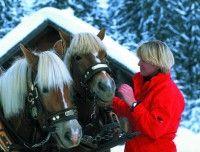 pferdekutschenfahrt-klein.jpg